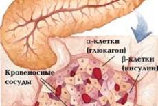орган пищеварения