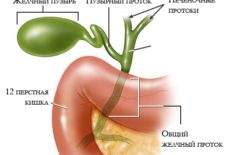 орган, производящий желчь